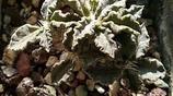 清新可愛的植物陽臺,苔蘚和多肉才是我的最愛