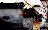 安徽的秋天,已經把攝影師逼瘋了