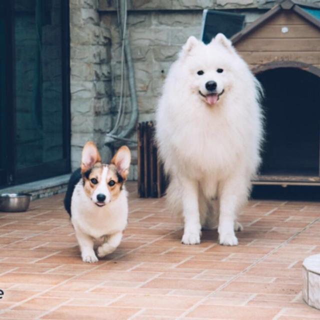 有助狗狗毛髮亮澤的6種食物,普通家庭都有!