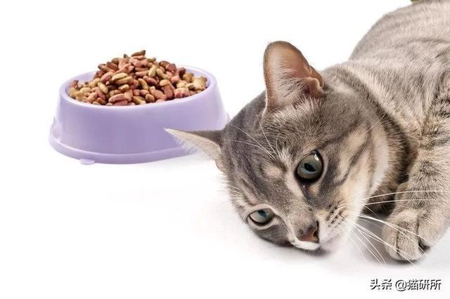 貓咪生病不吃飯?三招教你讓貓咪恢復食慾