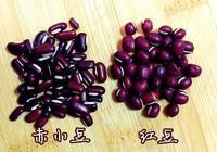 什麼是赤小豆、紅豆