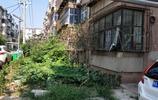 河南安陽:實拍一個破舊小區的變形記