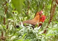 """養殖戶的福利,消費者安全——養殖的""""平安保險"""""""
