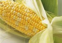 玉米雖好,但吃玉米之後,不能碰此種食物,得忌口,告訴家人