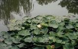我的旅行日記 遊樑家墩 一個觀錢塘江的潮水的最佳地點