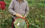 朱之文微博晒摘棉花照片,卻因為裝棉花的袋子引起了網友的罵戰