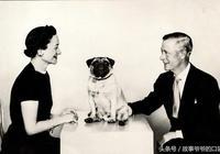 退位的愛德華八世及夫人,愛哈巴狗如子女,晚年長得與愛犬有點像