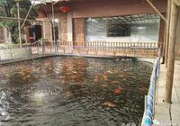 什麼樣的水質能養出色澤漂亮的錦鯉