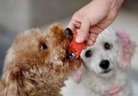 讓狗狗長壽的6大好習慣,你做對了嗎?