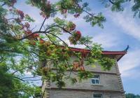 廈門大學鳳凰花已美成這樣了,驚豔了鷺島仲夏時光!