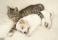 """男女最大差異:用兩種動物來形容,男人像""""狗"""",女人像""""貓"""""""
