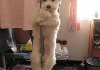 狗子日常奇怪的行為習慣,看看和你們家的一樣嗎?