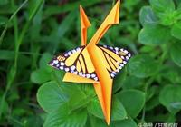 像不像真的?漂亮的DIY手工紙蝴蝶!還很容易DIY製作!