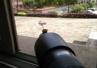 屌絲攝影師用圖片告訴你,怎樣擺拍一棵酢漿草