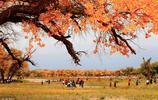 相比納米比亞死亡盆地的枯樹,我更喜歡我國的5大胡楊林,很美麗