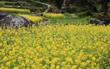 上饒望仙葛路,油菜梯田構成一幅絕美彩繪畫,藏在深山鮮為人知