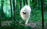 地球上10大中型犬,第六中國沙皮犬,第一可全天候工作