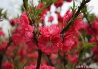 《春之美》