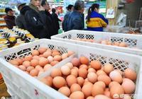 想養殖蛋雞,大家覺得2020年雞蛋行情會怎麼樣啊?