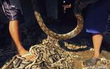 名貴蛇皮包的製作現場竟如此恐怖,看完你還敢買嗎?