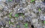 農村老漢挖200斤寶貝,有人出8千元不賣,稱論斤還能值4千