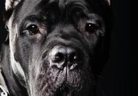 養狗經驗10條,切身結論(收藏備用)