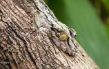 大自然中最善於偽裝的動物,劇毒蝮蛇偽裝最難分辨!