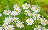 大興安嶺的野花爭奇鬥豔、各領風騷,你能說出它們的名字嗎?