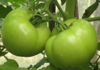 13種毒到會死人的蔬菜!千萬不要讓家人吃錯了!