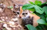 動物圖集:機智的動物