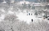 武漢大雪|帶你看雪後武漢的美景,快來看看是否有你喜歡的地方