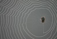 下聯是:蜘蛛織網網蜘蛛。才子佳人對上聯是?