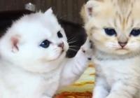 2只小奶貓整天爭寵,要偏心哪隻呢?