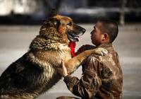 世界上的優質軍犬犬種有哪些?軍犬圖鑑請收好!