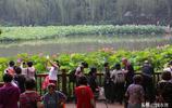 西安城裡有多個荷花觀賞地,最美荷花在興慶宮
