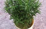 不管工資高不高,家裡一定要放這9盆養人盆栽,盆盆飄香對身體好