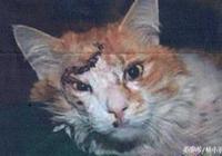 主人醫院認領失散的緬因貓,當見到貓的那一刻主人掉頭就走