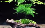 超級好養活還不怕陰暗環境的綠植,讓你的家煥然一新