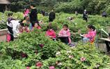 鄭州公園展出萬株牡丹 市民:不用去洛陽花錢看了