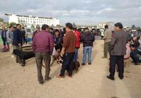 男子拉著一隻鬥牛犬到狗市出售,圍觀者很多卻無人想買!