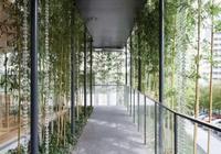 瑞博|庭院裡的竹,到底美在哪裡?