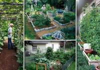想在院子裡種植喜歡的蔬菜和水果,這12種方法可以看一下!