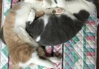 養兩隻以上貓咪的,你會偏心嗎?