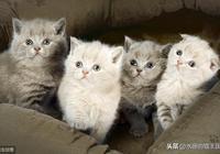 小奶貓超可愛但是不好養?請看0~3個月幼貓成長指南