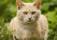 散文《一隻貓》