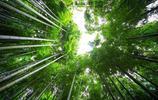 曲徑通幽處,最美最寧靜的竹林,看見了就無法忘記
