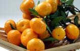 桔子就要吃黃岩蜜桔