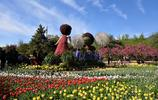 北京植物園繁花似錦,除了室外美景如畫,還有亞洲最大的溫室