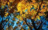 旅行攝影:錫林郭勒風光