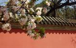北京植物園一日遊!